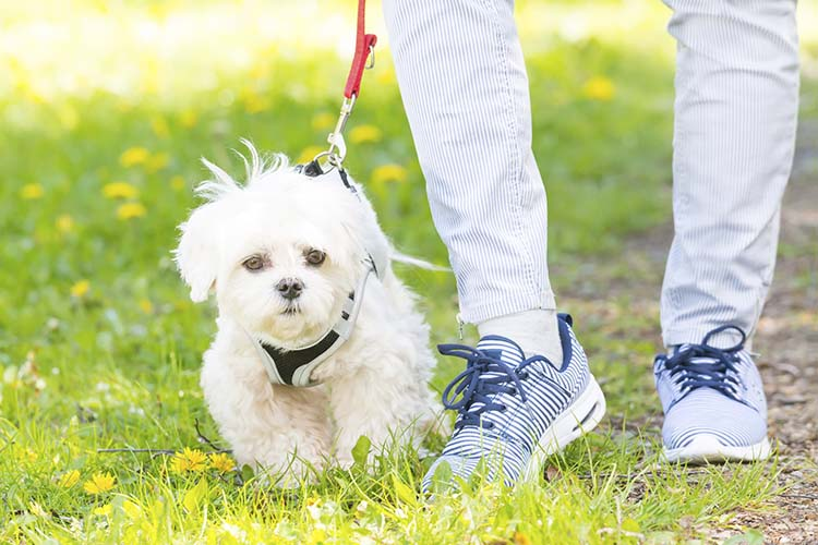 Considerations in Buying the Collars for Your Dog